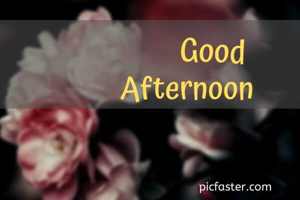 New Good Afternoon Images, Photos In [2020]