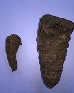 वत्सनाभ (वछनाभ) या मीठा विष एक औषधीय वनस्पति है-Vatsanabh or Indian Aconite or Blue Aconite is a toxic medicinal plant