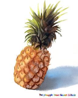 水彩で描いた台湾産パイナップル