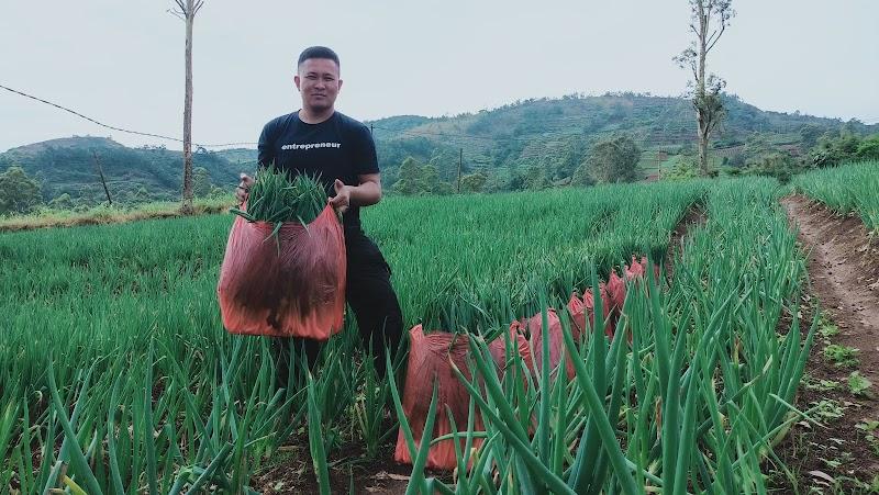 Potensi Pertanian di Kampung Sayur