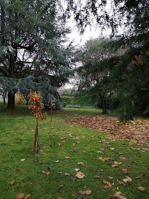 Le foglie sono tutte per terra, solo il piccolo pero se le tiene tutte
