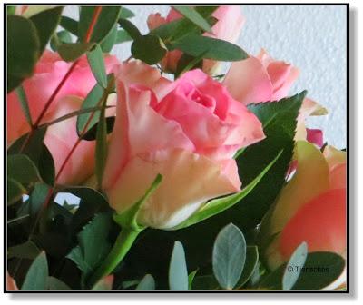 Rosen zum Muttertag