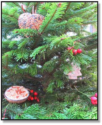 geschmückter Weihnachtsbaum für Wildvögel