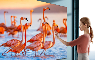 Woman touching screen with realistic image of flamingos