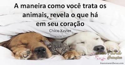 A maneira como você trata os animais, revela o que há em seu coração Chico Xavier