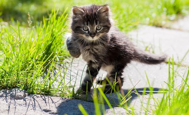 A quel âge un chaton peut sortir dehors?