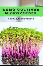 Cultivo Orgânico de Microgreens