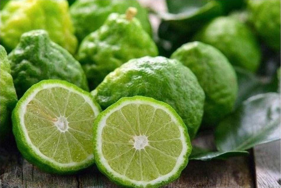 bibit duku jeruk keprok Jawa Timur