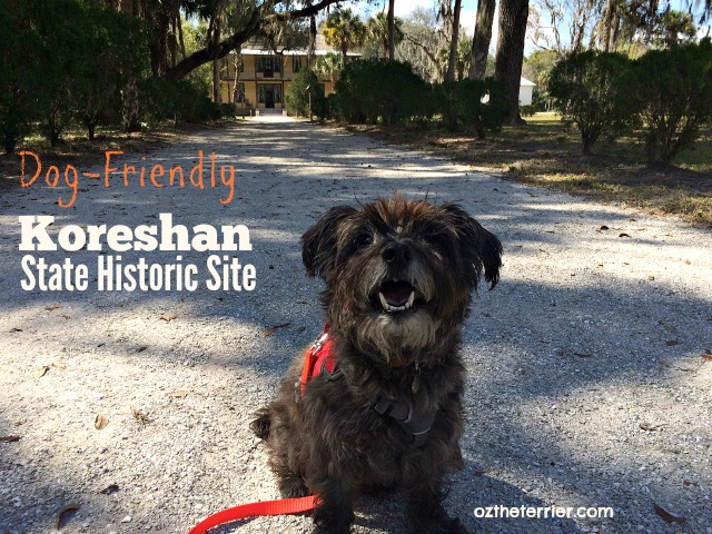 Oz the Terrier visits dog-friendly Koreshan State Historic Site