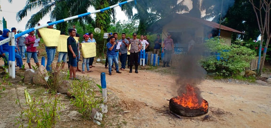 Tak Puas Jawaban Perusahaan, Massa Bakar Ban Saat Unras ke PT STA Group di Paluta