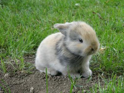 Anak kelinci putih