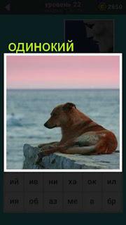 одинокая собака лежит на пирсе и смотрит на воду 22 уровень 667 слов