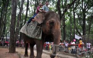 Wisata Kebun Binatang Ragunan Jakarta