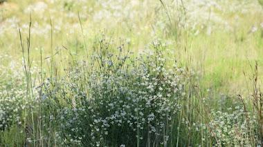 Primavera, jardines, plantas y flores en mi Instagram