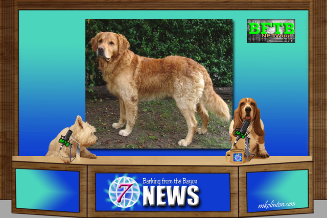 BFTB News shares the importance of microchipping your pets