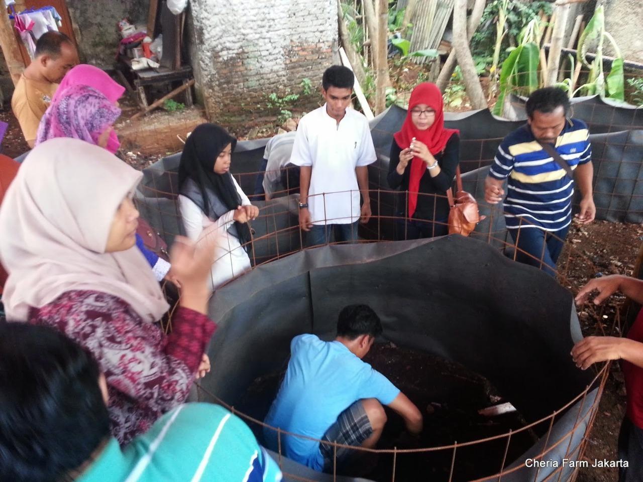 Budidaya Udang dan Ikan di Perkotaan