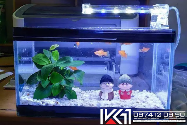 Bể cá mini phong thủy đẹp giá rẻ