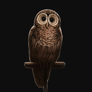 Gufo Bruno (Brown Owl)