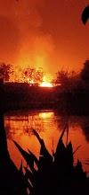 SUPAUL : निर्मली में आग लगने से दो घर सहित एक गाय जलकर राख।
