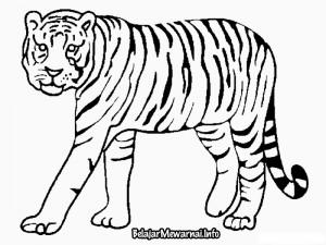 Mewarnai Gambar Harimau | Mewarnai Gambar