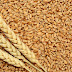 أمر طوارئ يمنع بيع وشراء القمح في الولاية الشمالية