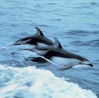Lumba-Lumba Mamalia Laut Yang paling Cerdas