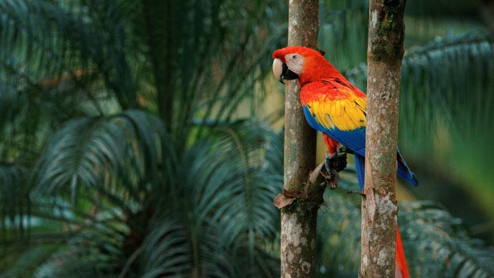 parrot insurance