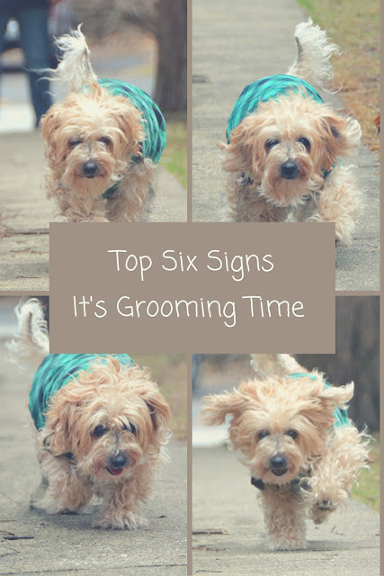 Top Six Signs it is time for grooming.