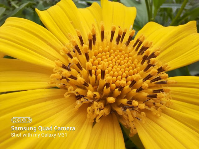 Hasil Foto Kamera Dedicated Macro Samsung Galaxy M31