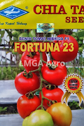 jenis tomat, buah tomat, manfaat tomat, cara menanam tomat, jual benih tomat, toko pertanian, toko online, lmga agro