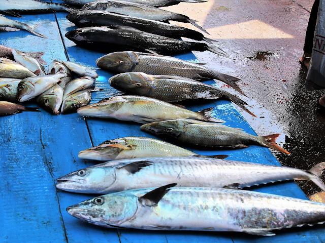 geur anaalklieren hond ruikt naar dode vis