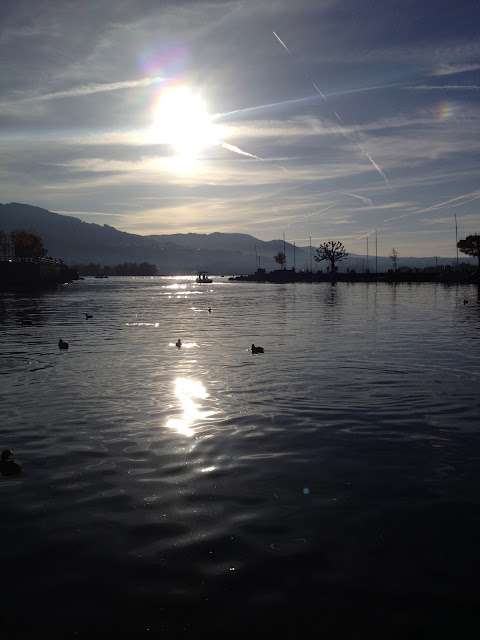 Lake Zurich with peaceful waterbirds floating on the top at sunset