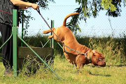 5 Tips For Training Dogs Successfully