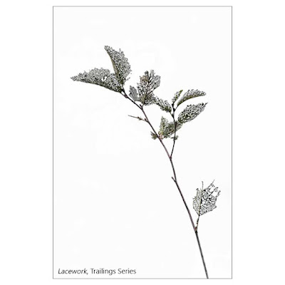 Lacework by Sara Harley, Trailings Project