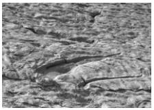 Uma equipe de paleontólogos descobriu um rastro de dinossauro carnívoro e nadador, no norte da Espanha. O rastro completo tem comprimento igual a 15 metros e consiste de vários pares simétricos de duas marcas de três arranhões cada uma, conservadas em arenito.