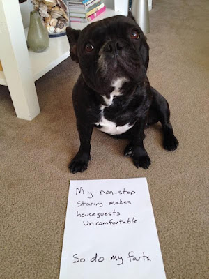 Funny Dog Shaming : Sorry about my non stop staring