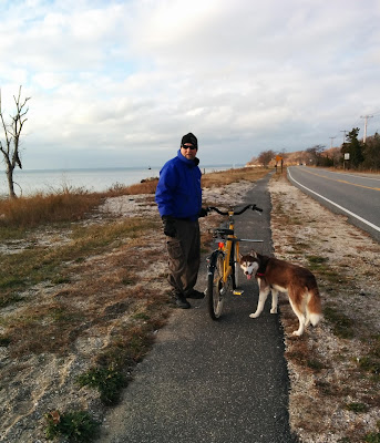6 Reasons to bike ride with your dog!
