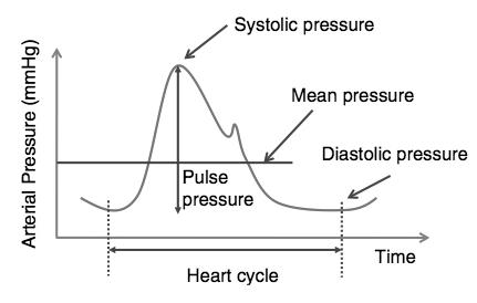 Simpsons Papazol - Ipertensione da classificazione in stadi