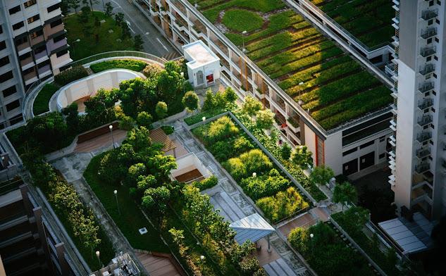 Các khu vườn trên sân thượng các tòa nhà ở Basel