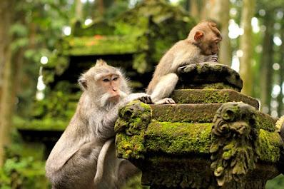 Ubud Monkey Forest, The Sacred Sanctuary, sanctuary, monkey, Bali island, family vacation, Indonesia's beautiful places