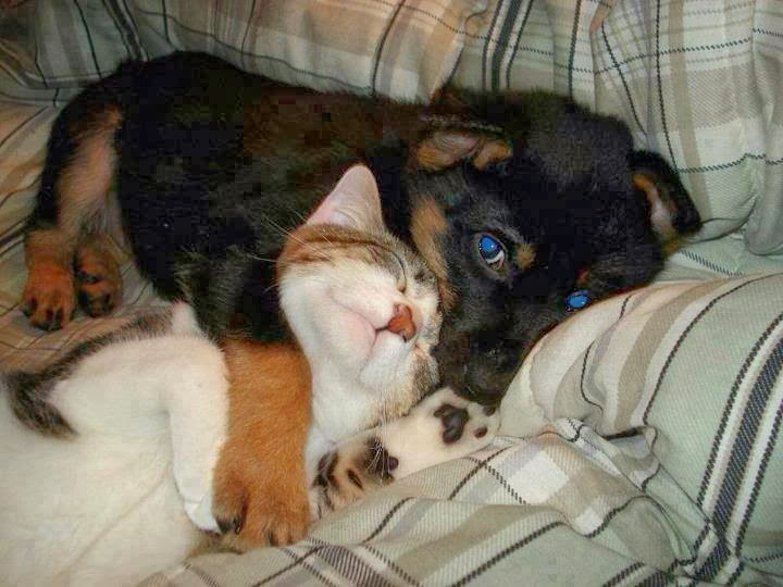 animals helping each other - photo #12