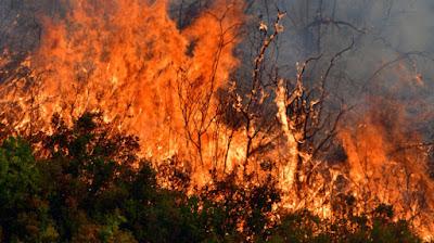 10 στρέμματα αγροτοδασικής χάθηκαν στην περιοχή Κεφαλόβρυση