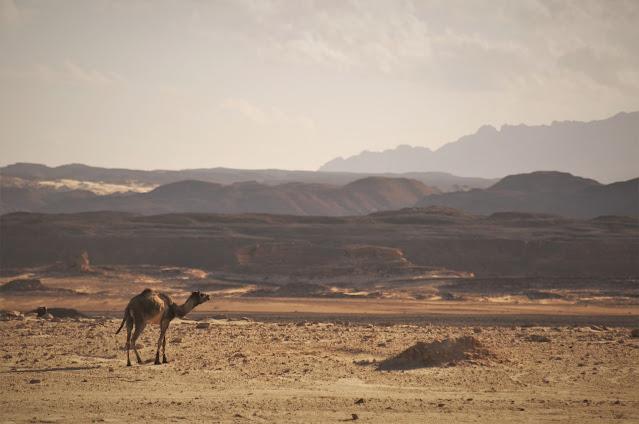Camila, Desertul Sinai, Egipt