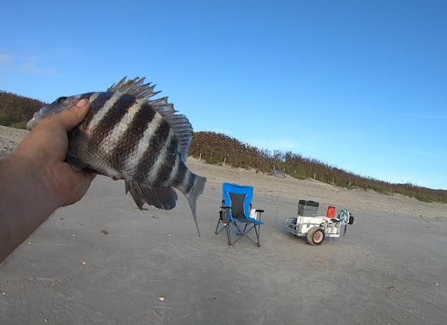 Florida, Florida East Coast, Florida East Coast Surf Fishing, Fishing, Fishing Report, East Coast, Surf Fishing, Florida Fishing, Fish Report, Anglers, Cocoa Beach