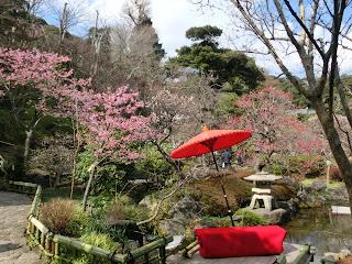 長谷寺のカワヅザクラ