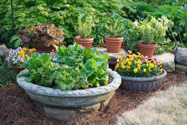 Easy Tips for Successful Container Gardening
