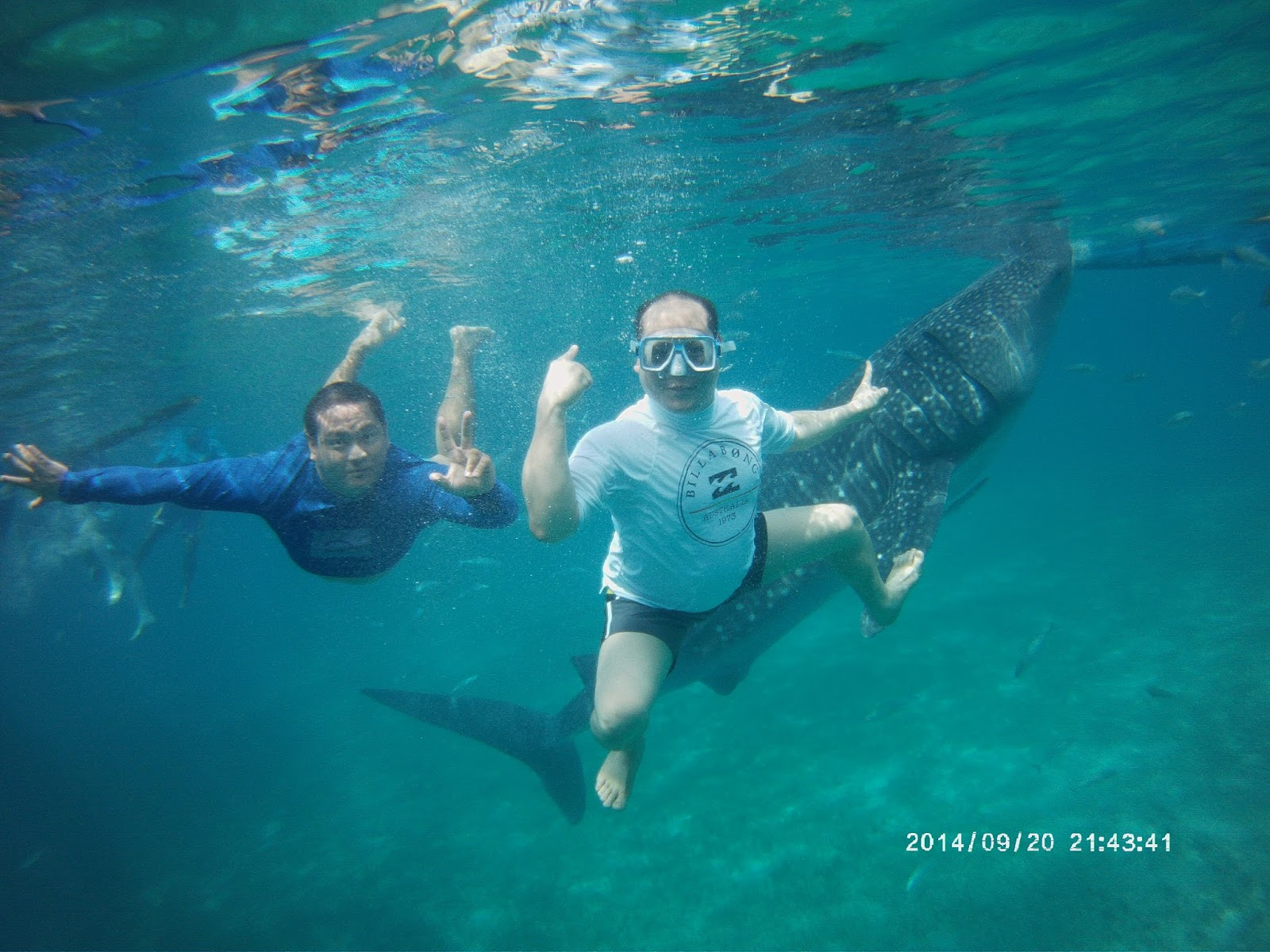 Whale Shark Watching in Oslob