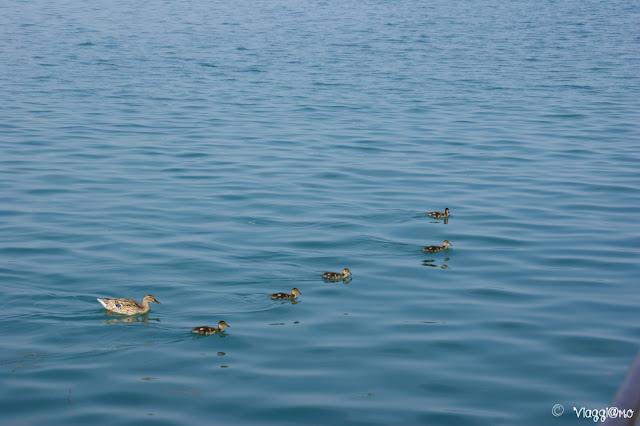 Abitanti del Lago di Garda