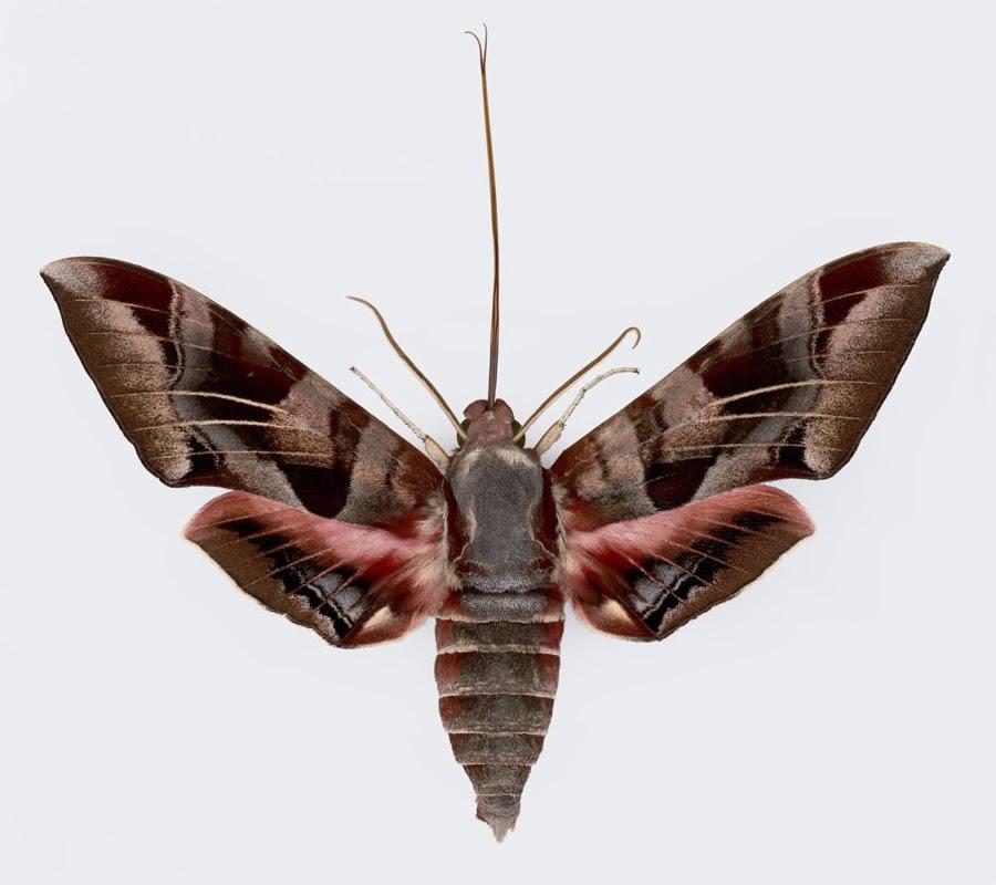 Moths Attracted Light