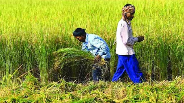 Sowing update of kharif